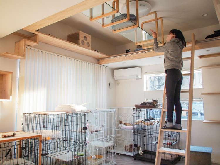 明るく、猫たちが思い思いにくつろげる猫部屋