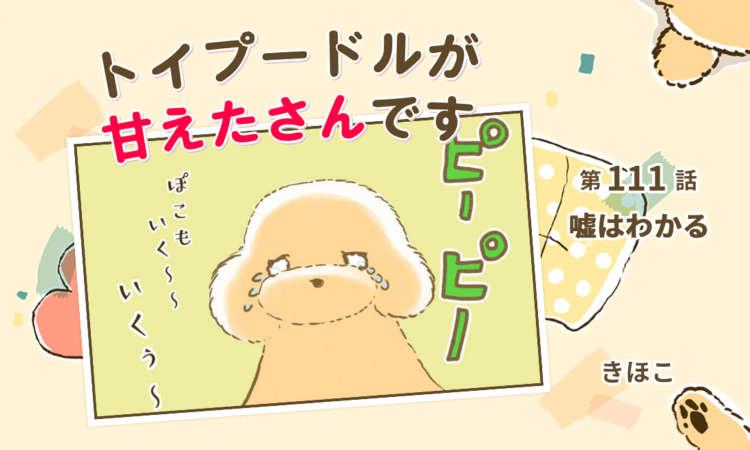 【まんが】第111話:【嘘はわかる】まんが描き下ろし連載♪ トイプードルが甘えたさんです