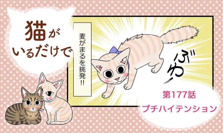 【まんが】第177話:【プチハイテンション】まんが描き下ろし連載♪ 猫がいるだけで(著者:暁龍)