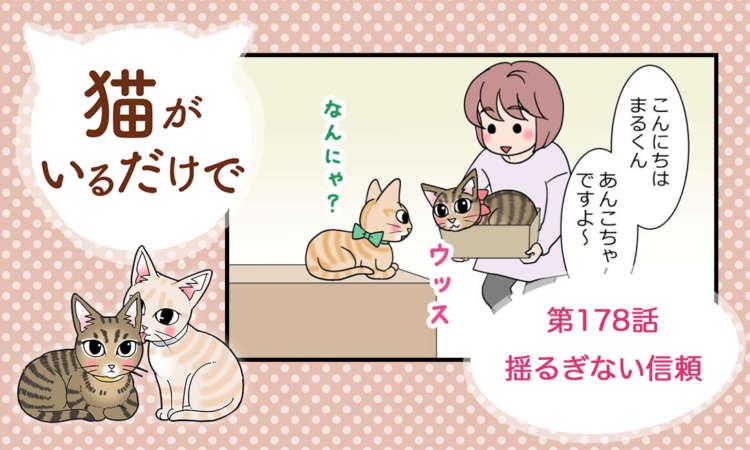 【まんが】第178話:【揺るぎない信頼】まんが描き下ろし連載♪ 猫がいるだけで(著者:暁龍)