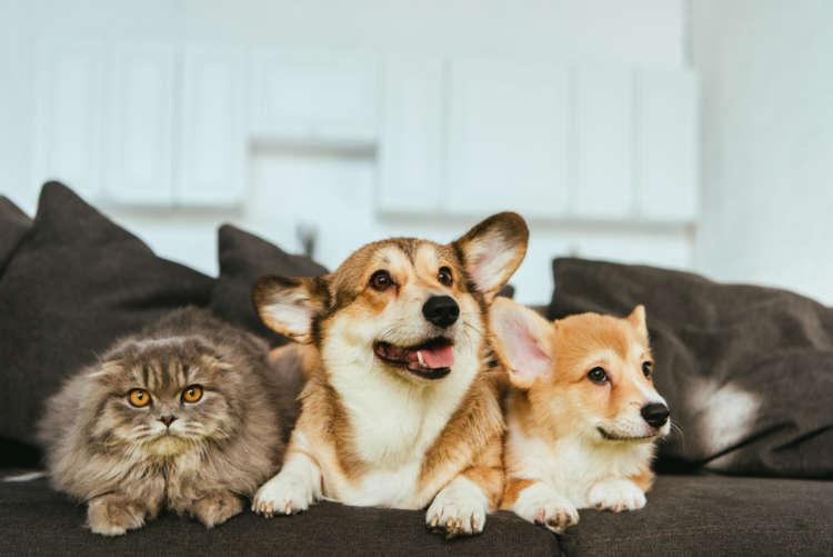 【獣医師監修】犬と猫、一緒に飼う場合のポイントは? 同居の注意点について