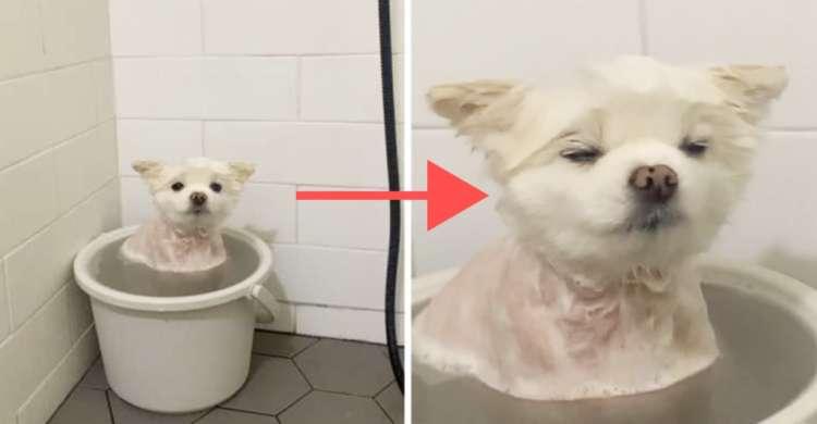 お風呂に浸かってほわほわしちゃうワンコさん。ウットリ顔が愛くるしくてたまらない(´艸`*)