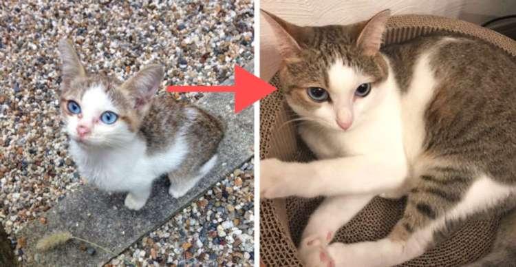 野良から完全室内飼育になった猫たちが集合! 愛情をうけて育った姿から、たくさんの幸せを感じる♡ 8枚