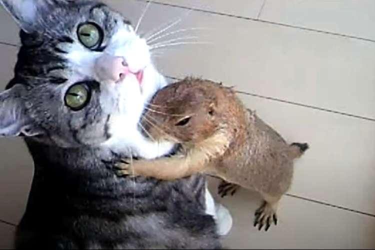 猫に「ペロペロ」をおねだりするプレーリードッグ。→ あまりの気持ち良さに、あられもない姿に…♡