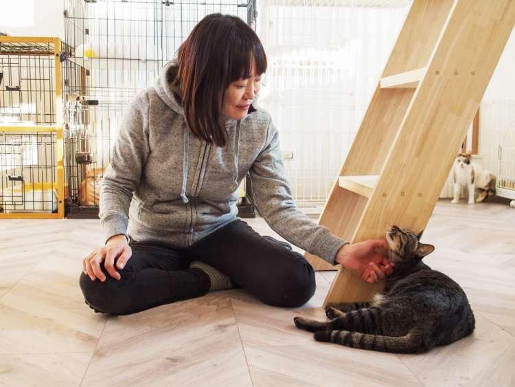 猫部屋で、かまってちゃんの「きなこ」と菊池さんのまったりタイム
