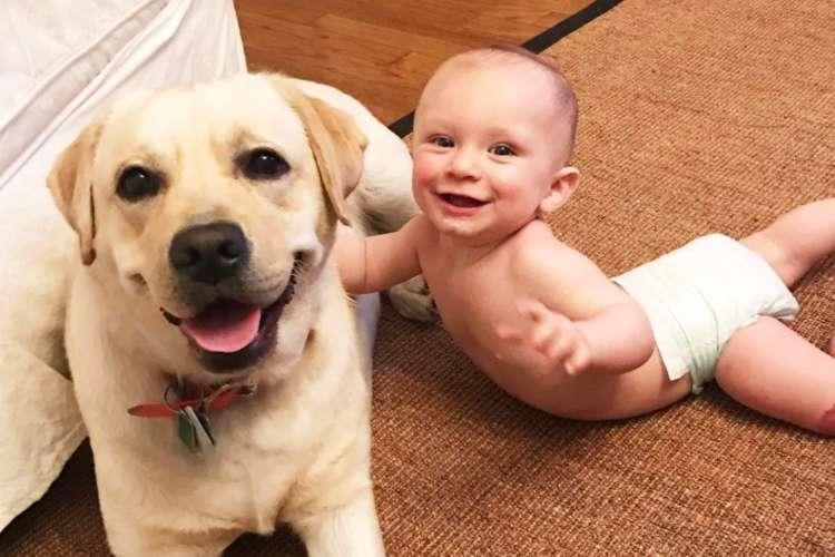 赤ちゃんに寄り添う、ラブラドール・レトリバー! まるでお母さんのような優しさに… ホッコリ♡