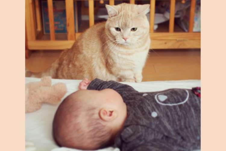 兄弟になったネコと赤ちゃん♡ 1年かけて、ゆっくりと距離を縮めていく様子に…心が温かくなる(10枚)