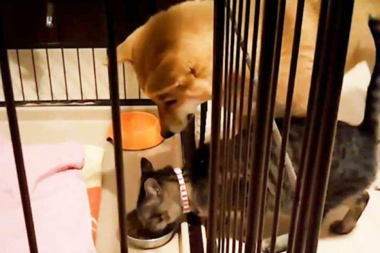【懐の深いワンコ】自分のご飯をニャンコに食べられてしまった柴犬さん。グッと堪える姿に称賛の声が!