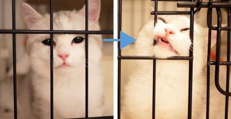 【美猫さんの執念】たとえ変顔になっても諦めるわけにはいかない。ニャンコの熱い思いが凄かった!