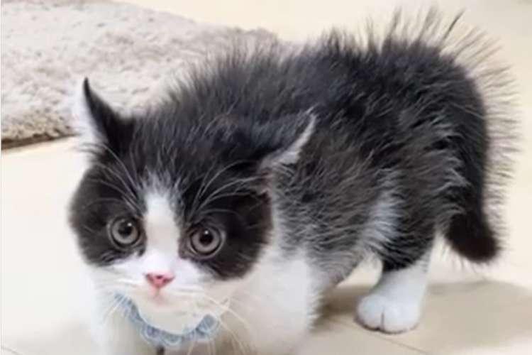 パヤパヤの毛を逆立てて一丁前に威嚇してくる子ネコ。怖くないけど、可愛いの迫力がすごかった♡