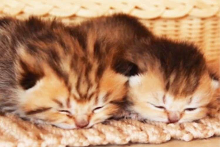 【ぬくぬく赤ちゃんお昼寝中】ふたりでくっついたら極上の温もり♡ ふわふわ子猫の癒しタイム♪