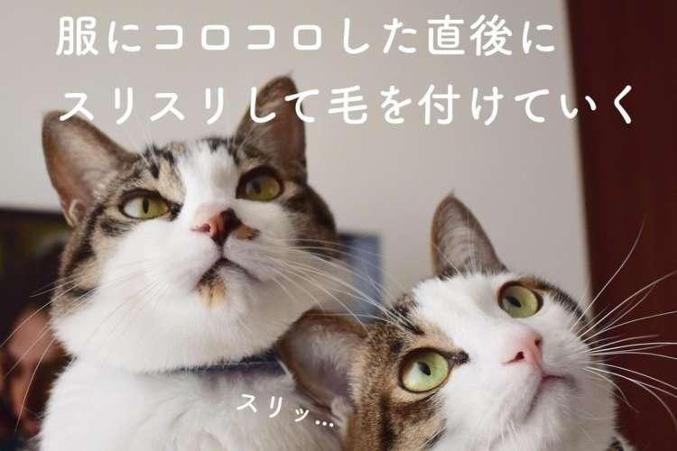 """猫飼いの人もそうでない人も。きっと共感できる""""猫あるあるのまとめ""""が面白すぎた(ΦωΦ)♪ 8枚"""