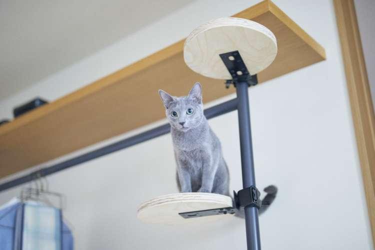 【獣医師監修】猫の「好きな場所で自由に過ごしたい!」を叶える家~へーベルハウスのペットと暮らす家