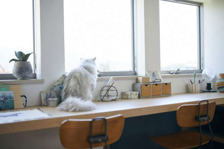 窓辺に猫が落ち着けるスペースを作ってあげよう