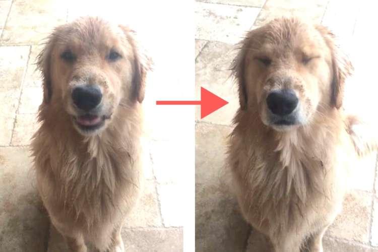 【泥遊びした?】飼い主さんに質問されたワンコ → その反応が、分かりやすすぎてカワイイ…♡