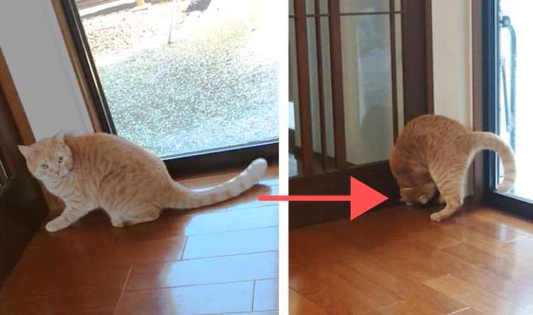 【ニャンコの必殺技♡】 ドアを開けるクセが強めのニャンコさん。驚異のくるりんぱッ!!