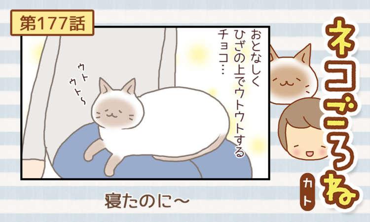 【まんが】第177話:【寝たのに~】まんが描き下ろし連載♪ ネコごろね(著者:カト)