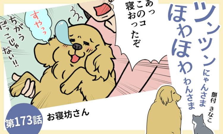 【まんが】第173話:【お寝坊さん】まんが描き下ろし連載♪ ツンツンにゃんさま ほわほわわんさま