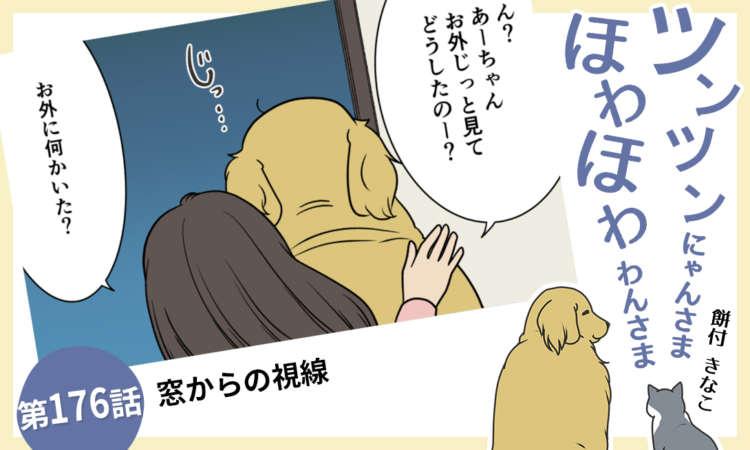 【まんが】第176話:【窓からの視線】まんが描き下ろし連載♪ ツンツンにゃんさま ほわほわわんさま