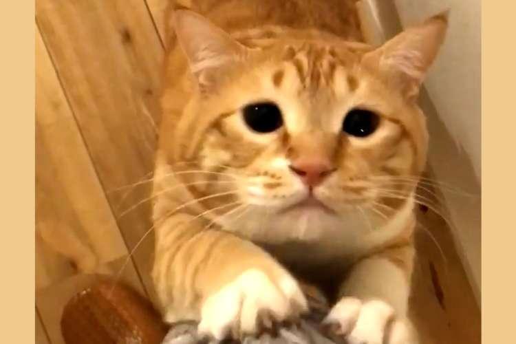 【食いしん坊スイッチオン!!】おかわり欲しさに甘ーいおねだり♡ しょんぼり顔の上目遣いは悩殺級!?