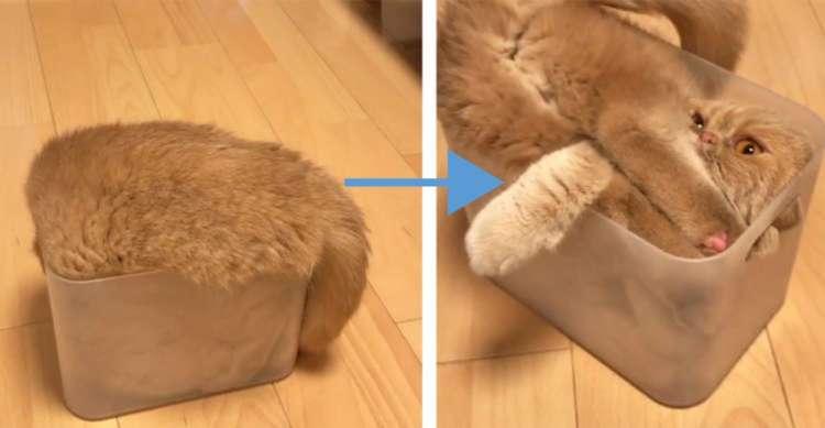 【ネコは液体説】小さい箱の中になんとしても収まりたいネコ! 頑張る姿がおもしろ可愛かった♪