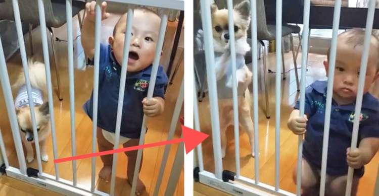 「い〜れ〜て〜」フェンス越しにおねだりする赤ちゃんを見て、ワンコも参戦! 微笑ましいふたりの時間♪
