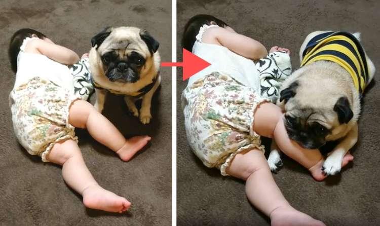 1時間かけ、ようやく眠ってくれた赤ちゃん! → そこへマイペースなワンコがやって来て…(/ω・\)