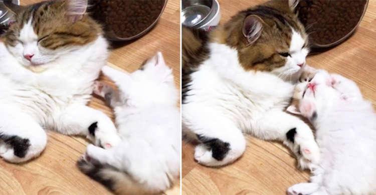 究極のかまってニャン!? 眠気と戦う兄にあの手この手で愛くるしいアピールをしちゃいます♪