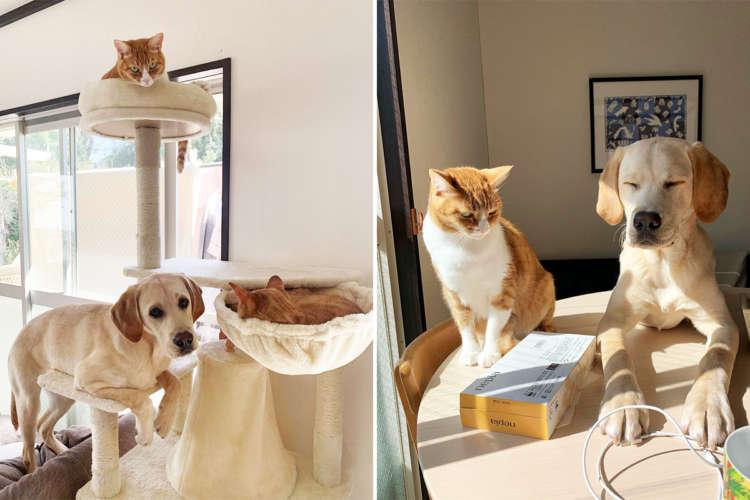 【猫になりたいワン!】一つ屋根の下で暮らすワンニャン。一緒にいると仕草が似てくる説は正しかった♪