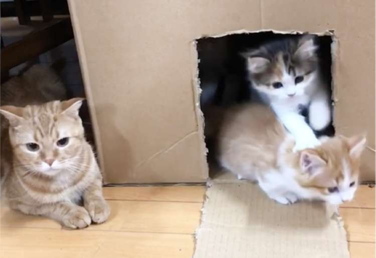 【点呼するニャ】次々箱の中から飛び出してくる子ネコたち。それを見守るニャンコが優しくて♡ 26秒