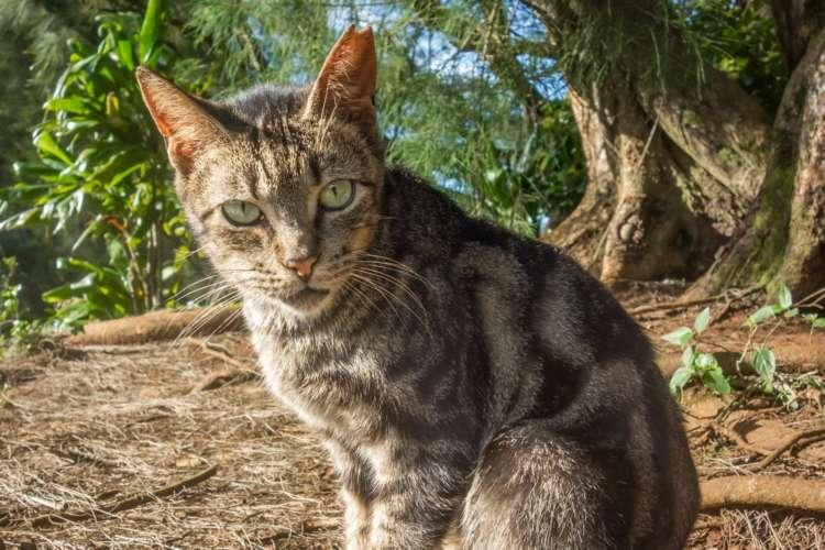 野良猫の耳がカットされているのには、じつはこんな理由があった