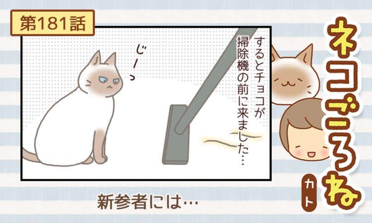 【まんが】第181話:【新参者には…】まんが描き下ろし連載♪ ネコごろね(著者:カト)