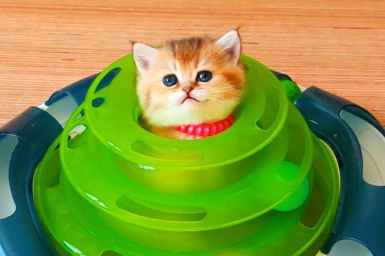 【いい場所みつけたニャ】オモチャをお家にしちゃった子猫。満足げな様子が、かわいかった…(;∀;)♡