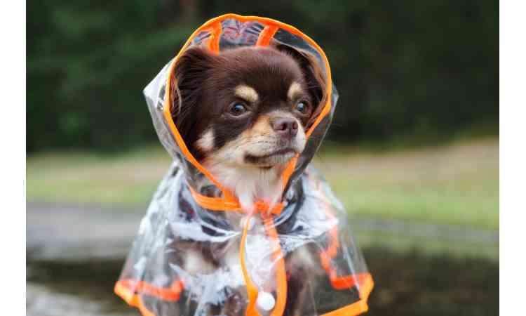 台風の季節、愛犬とお散歩に行けないときの過ごし方はどうする?