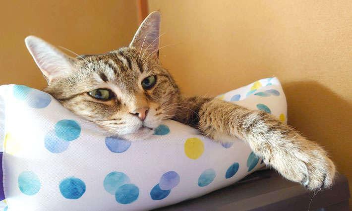 猫には猫の付き合いがあるねん