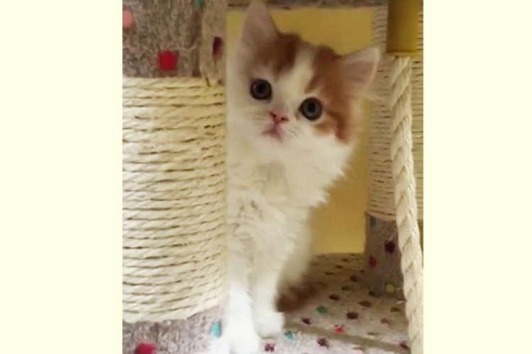 【緊張の瞬間!?】シャイな子猫ちゃんが勇気を振り絞って挨拶する姿に萌え(´∀`*)