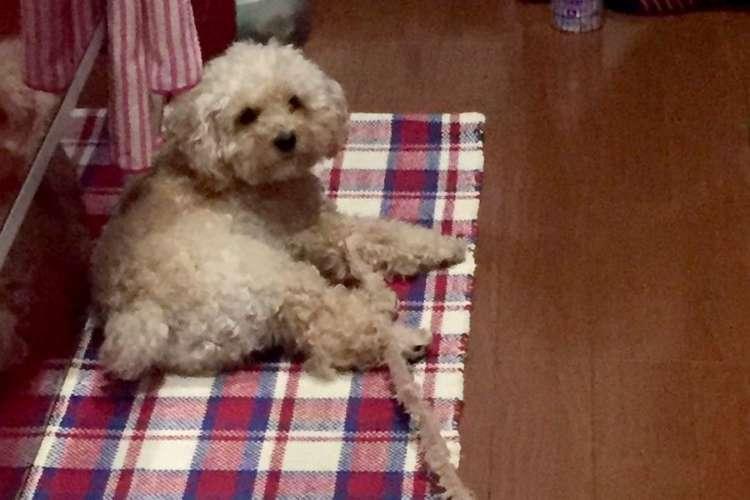 愛犬から出てる謎の糸… セーターみたいに、ほころびが出来てしまったのか!? 真相やいかに(艸д゚*)