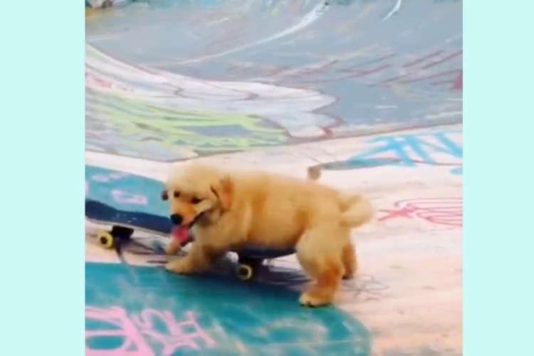 【スケボーが大好きな子犬さん】失敗しても何度も挑戦する姿が健気で可愛い! 応援したくなる〜ッ♡