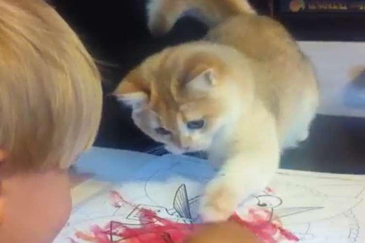 """【 子猫の先生っぷり 】塗り絵をする少年の手元を見つめる猫。この後、肉球でぺしぺし """"指導"""" する♡"""