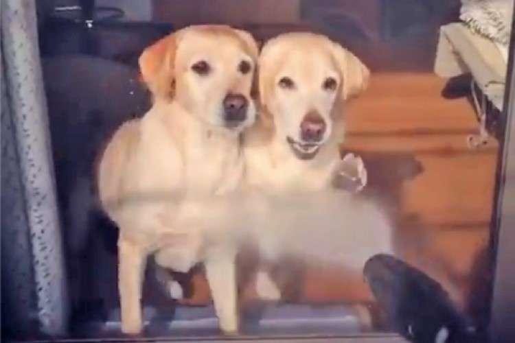 【激しすぎるダンス♪】高圧洗浄機で窓をお掃除し始めた瞬間…! 愛犬たちに反応が(; ・`д・´)