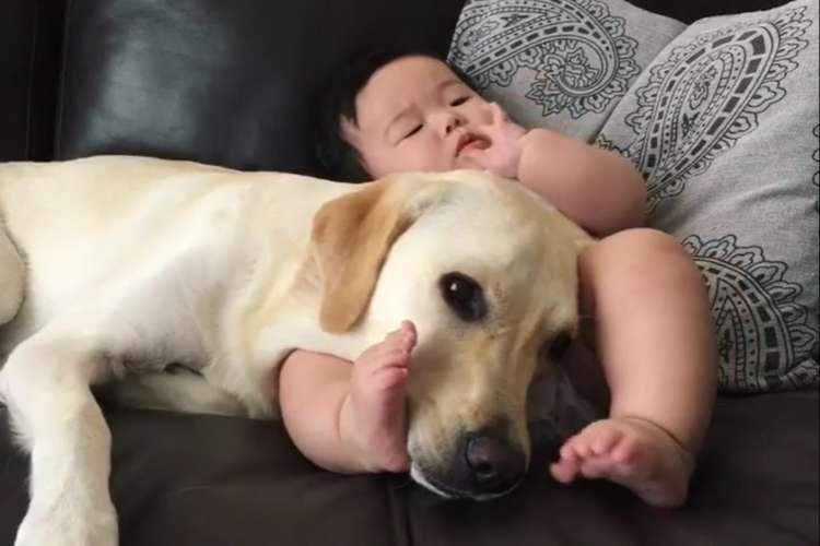 赤ちゃんの傍でまったりするワンコ。何があっても寄り添い続ける姿に… 胸がホッコリ(*´ω`*)♡