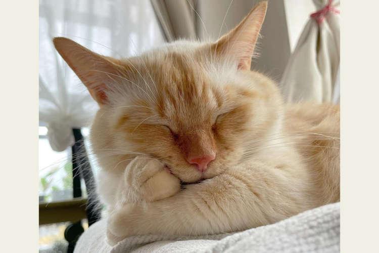 セルフ腕枕でスヤスヤ眠るニャンコ。ついつい熟睡しすぎて思わずカクッ! その時見える口元がキャワワ♡