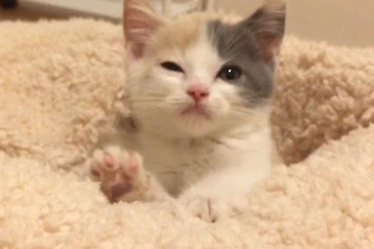 【フミフミ匍匐前進の攻撃!】グーパーしながら近づいてくる子ネコちゃん。この攻めには敗北しかない♡