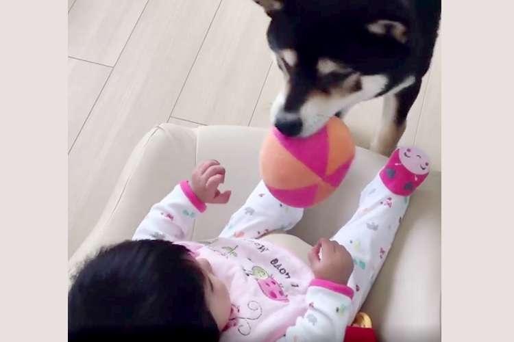 「一緒にあそぼ〜♪」赤ちゃんをボール遊びに誘う姉ワンコ。優しさあふれる様子にほっこり(*´▽`*)