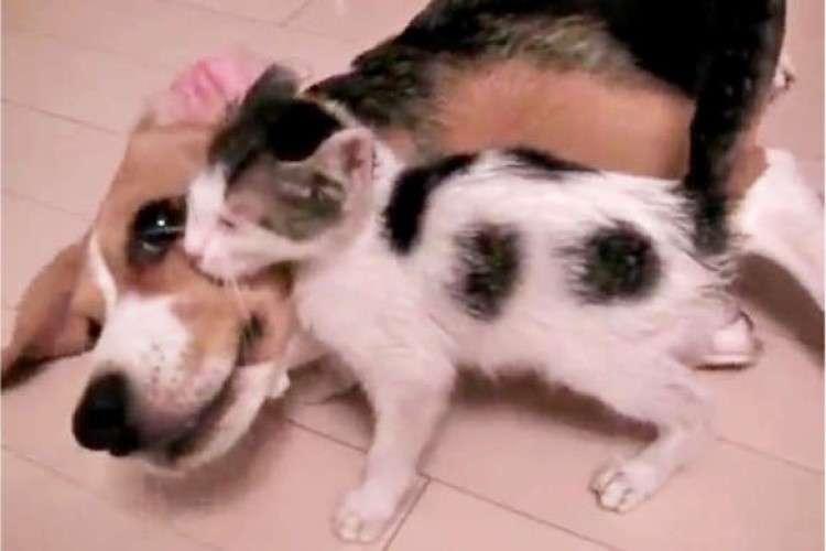 【先住犬のぬくもり】保護されたひとりぼっちの子ネコ。彼女が見つけた温かい居場所は…。(70秒)