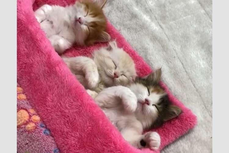 【これは天使のお昼寝…♪ 】お布団でスヤスヤねむる子猫ちゃんたち。かわいい寝顔から目が離せない〜♡