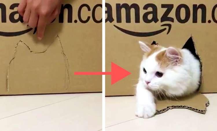 箱の中から『しゅんっ』と現れる! ニャンコの動きがかわいすぎて… 無限ループで見ていたい(笑)