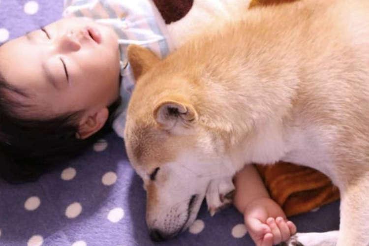 柴犬は子どもの最高のパートナー!? 心がポカポカになる『柴犬×子ども』の仲良し写真集(*´ω`)♡