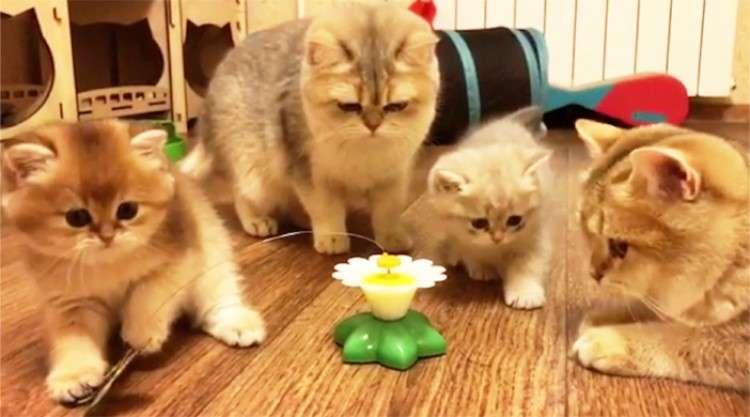 【おもちゃの前に猫だかり!?】みんなが狙うチョウチョを一番最初に仕留めたのは一体…(゚∀゚)?