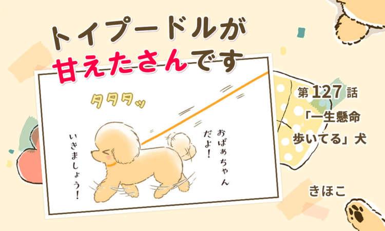 【まんが】第127話:【「一生懸命歩いてる」犬】まんが描き下ろし連載♪トイプードルが甘えたさんです